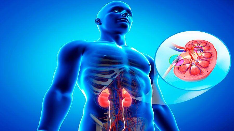 Uno de cada cuatro pacientes con diabetes desarrollará algún grado de daño renal