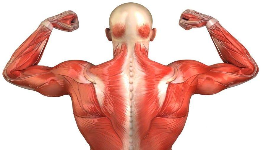 Aumento de masa muscular ayuda para prevenir la diabetes tipo 2